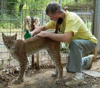 Lynx Cat Pet Canada